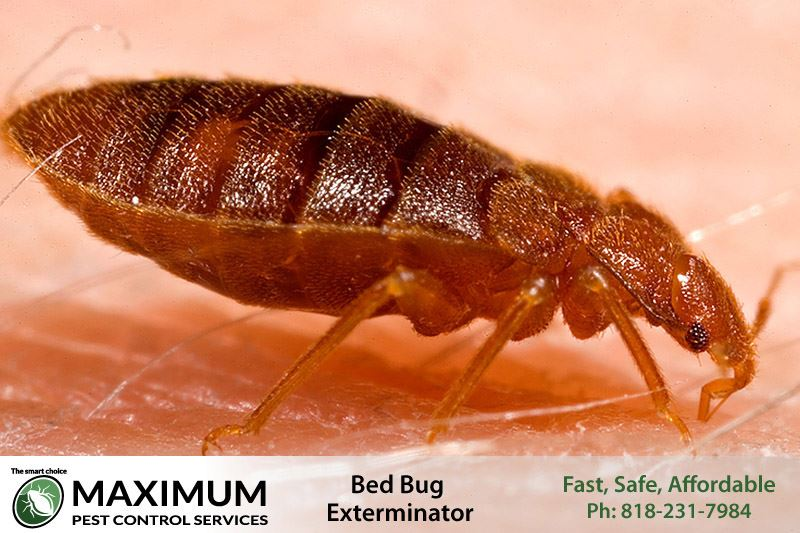 bed bugs extermination and removal service