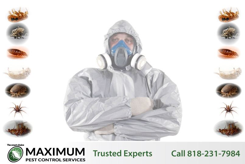 professional technicians exterminating pests