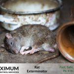 dead rat on the floor