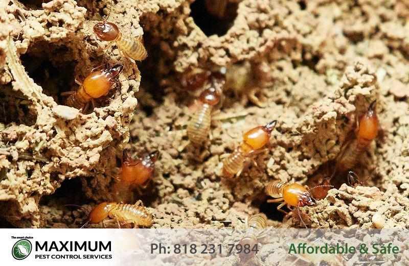 Professional Termite Extermination Service