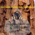 Termite damage on wood structure of a home