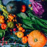 variety of freshly harvested garden vegetable